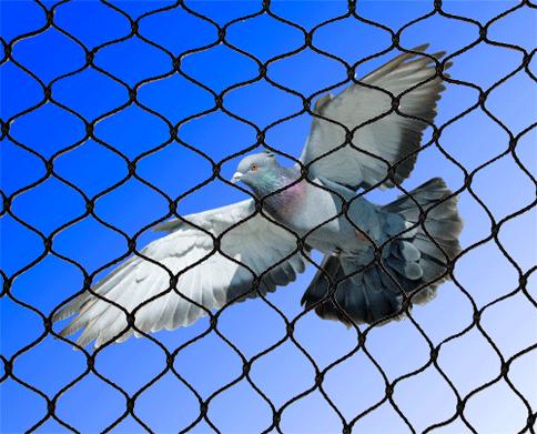 Bird-Net